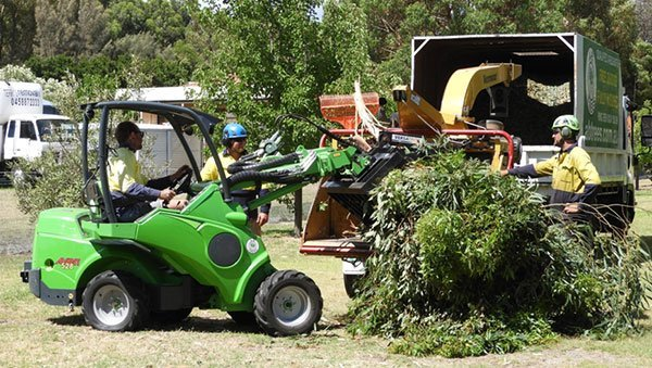 tree removal 16