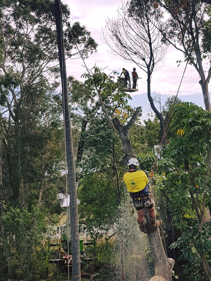 tree removal 19